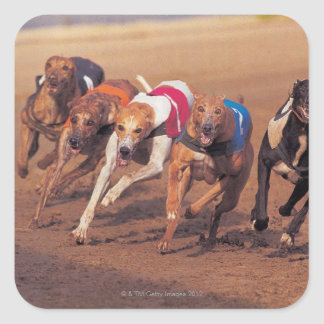Greyhounds racing on track square sticker