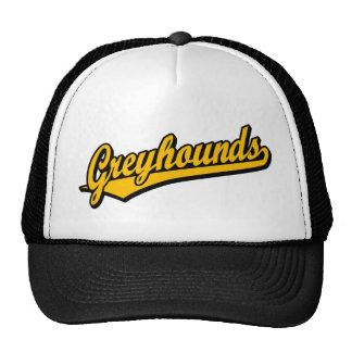 Greyhounds script logo in orange trucker hat