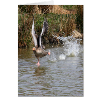 Greylag Geese Card