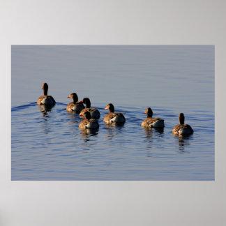 Greylag Geese Flock Print