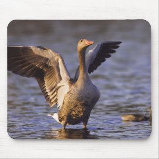 Greylag Goose, Anser anser, adult with young, Mouse Mat
