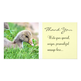 Greylag Goose Gosling Thank You Picture Card