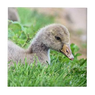 Greylag Goose Gosling Tiles