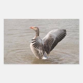 Greylag Goose Rectangular Sticker