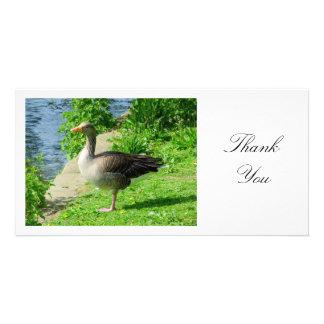 Greylag Goose - Thank You Customised Photo Card