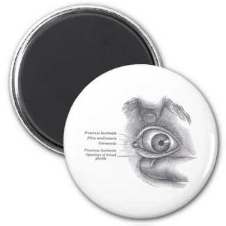 Greys Anatomy Eye Magnet