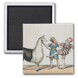 Grimaldi and the Alpaca, in the Popular Pantomime Magnet