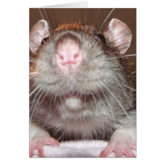 grinning rat Birthday card