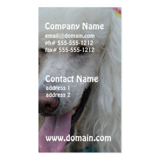 Grinning White Standard Poodle Double-Sided Standard Business Cards (Pack Of 100)