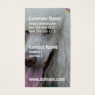 Grinning White Standard Poodle Business Card