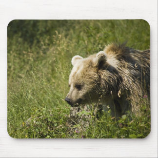 Grizzlies  Mouse Pad