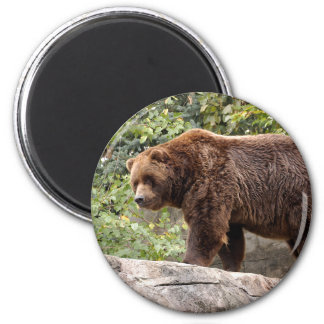 grizzly-bear-001 6 cm round magnet