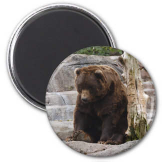 grizzly-bear-010 6 cm round magnet