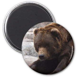 grizzly-bear-016 6 cm round magnet