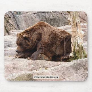 grizzly-bear-018 mouse pad
