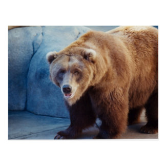 Grizzly Bear 1 Post Cards