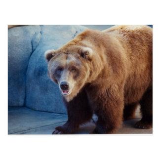 Grizzly Bear 1 Postcard