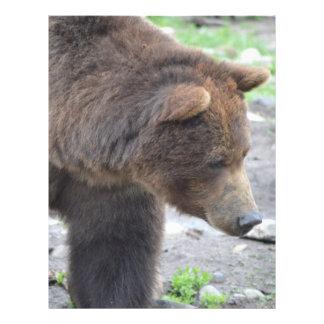 Grizzly Bear 21.5 Cm X 28 Cm Flyer