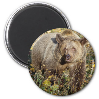 Grizzly Bear 6 Cm Round Magnet