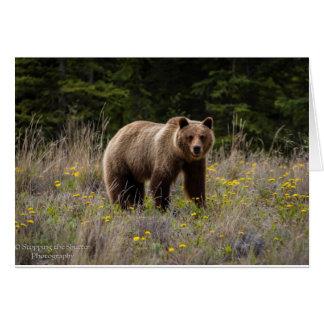Grizzly Bear - Alaska Card