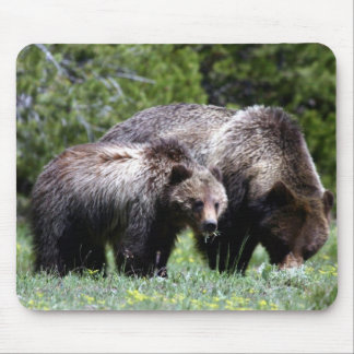 Grizzly Bear and Cub Mouse Pad