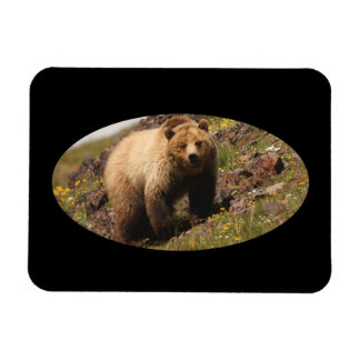 Grizzly bear and wildflowers vinyl magnets