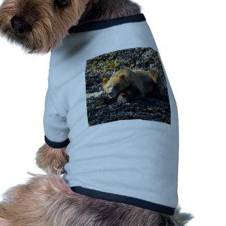 GRIZZLY BEAR ART RINGER DOG SHIRT