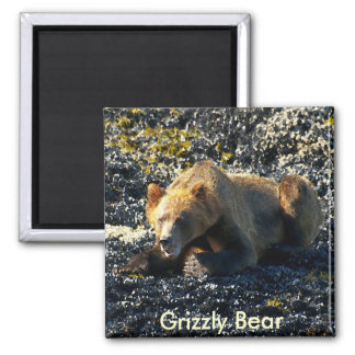 Grizzly Bear Art Square Magnet