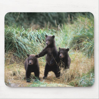 Grizzly bear, brown bear,  cubs in tall grasses, mouse mat