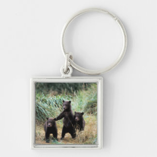 Grizzly bear, brown bear,  cubs in tall grasses, Silver-Colored square key ring