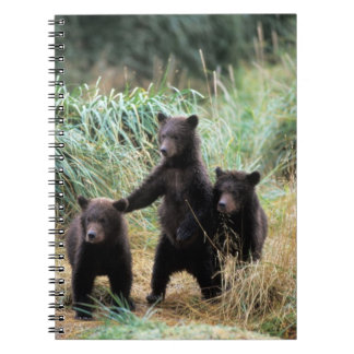 Grizzly bear, brown bear,  cubs in tall grasses, spiral notebook