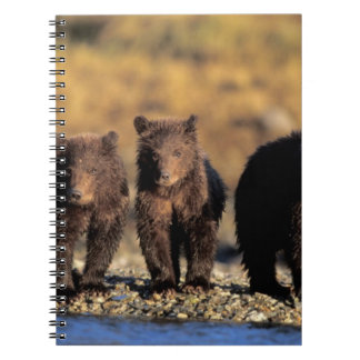 Grizzly bear, brown bear, cubs, Katmai National Notebooks