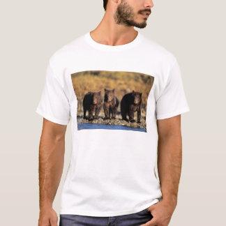 Grizzly bear, brown bear, cubs, Katmai National T-Shirt