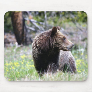 Grizzly Bear Cub Mouse Pad