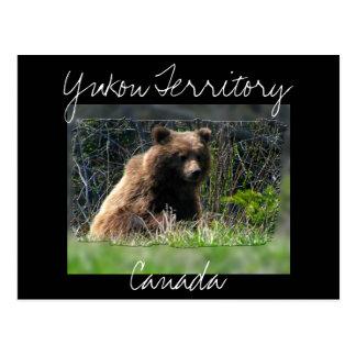 Grizzly Bear Cub Postcard