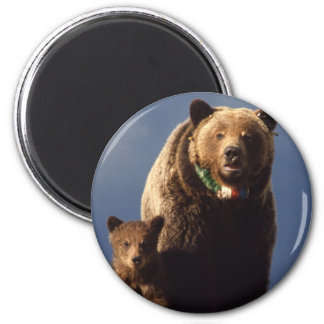 Grizzly Bear family 6 Cm Round Magnet