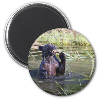 Grizzly Bear in the Water Refrigerator Magnet