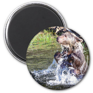 Grizzly Bear in the Water Fridge Magnets