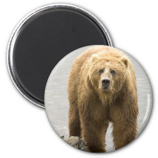 Grizzly Bear in Water at the Kodiak Refuge 6 Cm Round Magnet