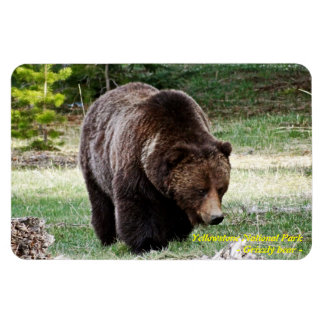 GRIZZLY BEAR IN YELLOWSTONE NATIONAL PARK RECTANGLE MAGNET