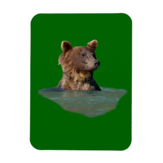 grizzly bear intrigue flexible magnet