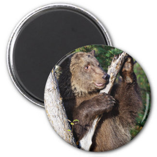 Grizzly Bear leaning on a Tree Refrigerator Magnet