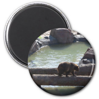 Grizzly Bear Refrigerator Magnet