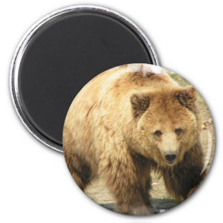 Grizzly Bear Magnet Fridge Magnets