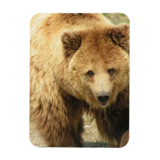 Grizzly Bear Magnet Rectangle Magnets