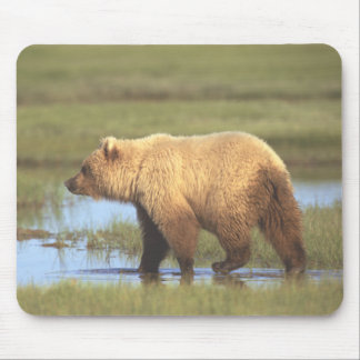 Grizzly Bear Mousepad Mouse Pads