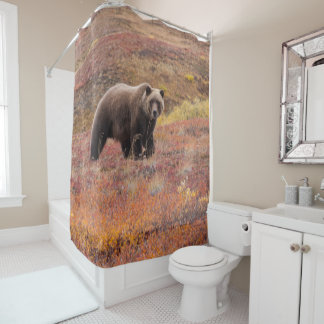 Grizzly Bear Moves Through Autumn Colors In Alaska Shower Curtain