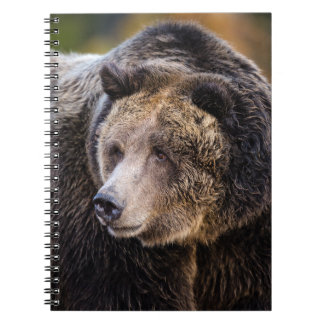 Grizzly Bear Notebook