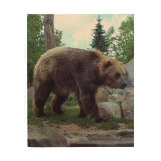 Grizzly Bear photo on wood Wood Wall Art