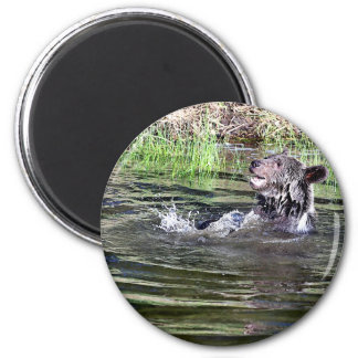 Grizzly Bear playing in the water Refrigerator Magnet